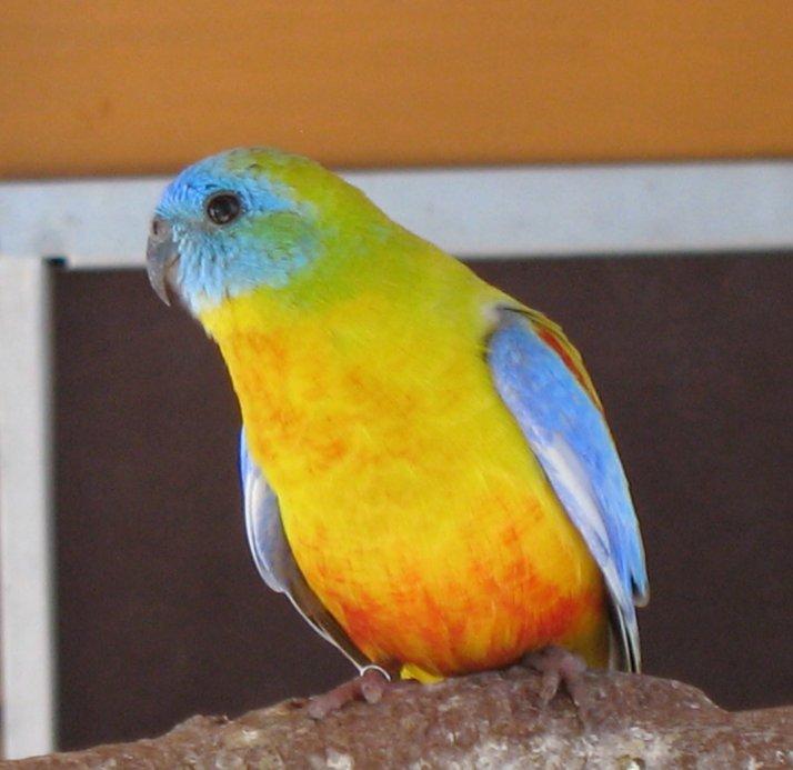 graf zuchtboxen für vögel